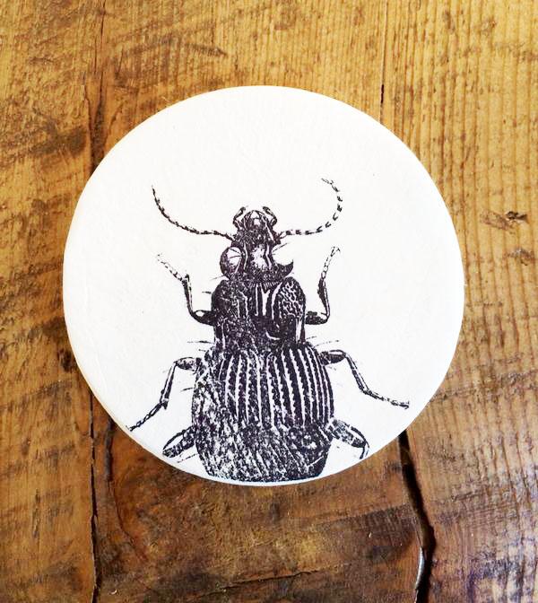 foto transferencia escarabajo